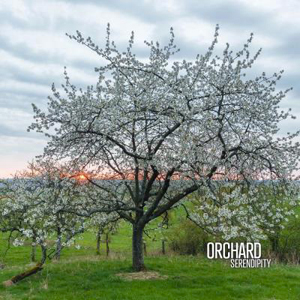Orchard - Serendipity (CD)